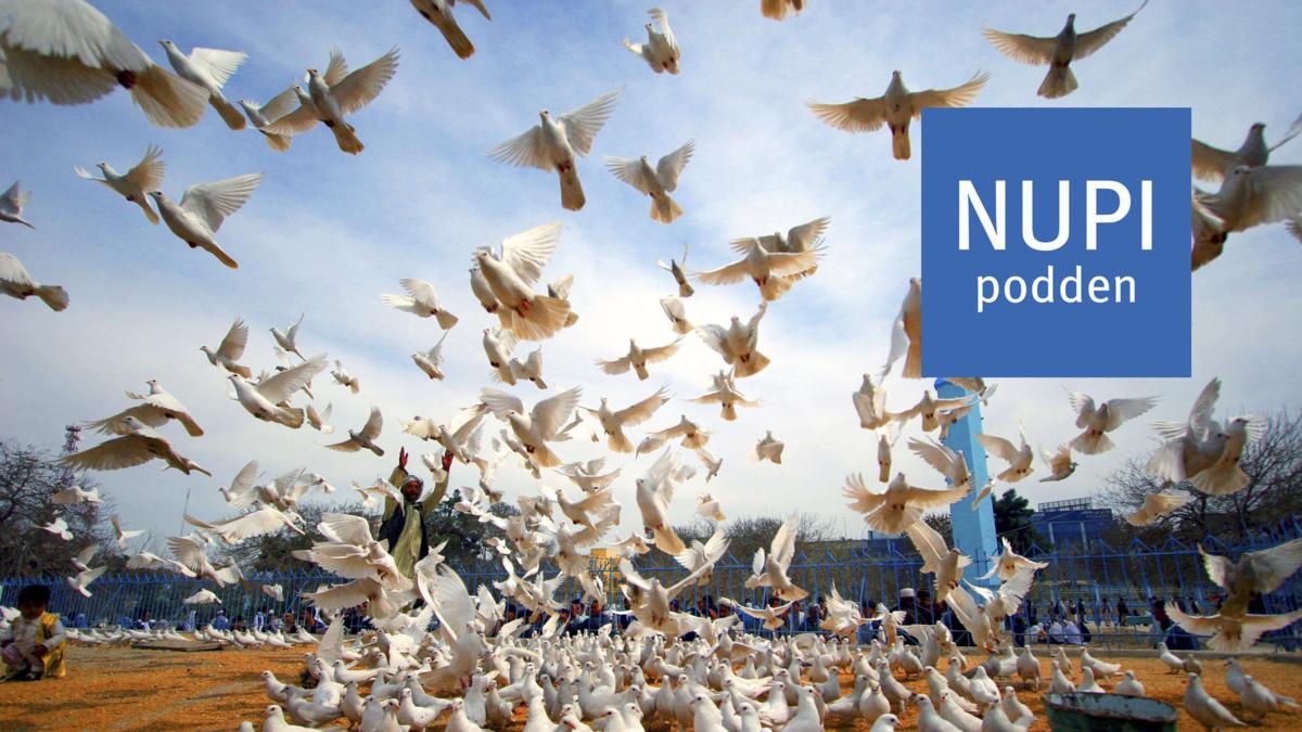 Bildet viser fredsduer