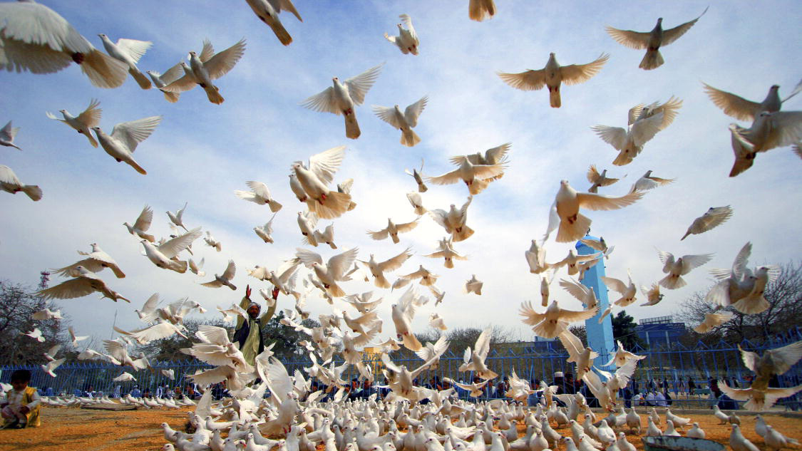 The image shows peace doves